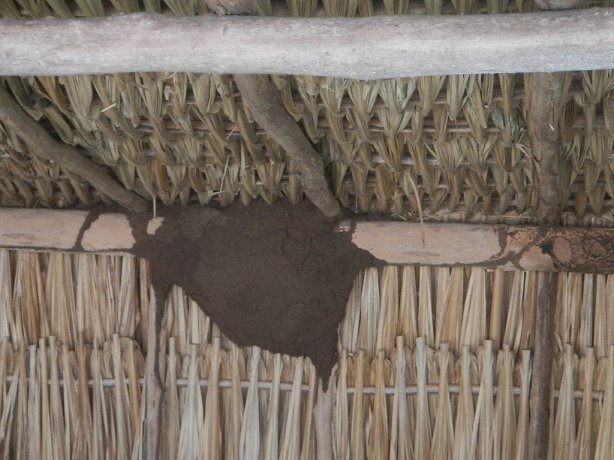 Caribbean Termite aerial nest in top of a palapa structure covering a Mayan Ruin tomb www.charlotte-pest-control.com